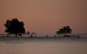 Обои туман, деревья, сергей доля, река, пейзаж