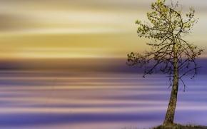 Картинка стиль, фон, дерево, цвет