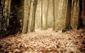 Картинка осень, лес, листья, деревья, туман, путь, дорожка