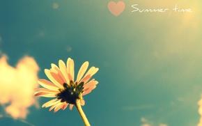 Картинка цветок, лето, небо, растение, heart, colours, время года, summer flower