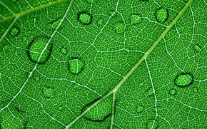 Обои вода, капли, природа, лист, роса, растение