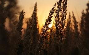 Картинка nature, sunset, plant