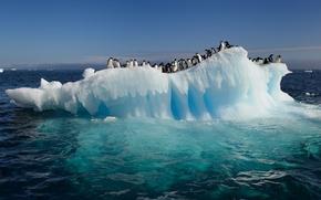 Обои океан, пингвины, вода, Антарктида, льдина