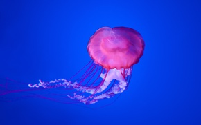 Картинка underwater, blue, jellyfish