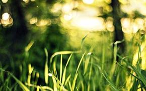 Картинка зелень, трава, макро, свет, природа, боке