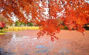 Картинка осень, листья, деревья, озеро, пруд
