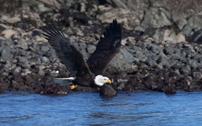 Птица полёт орёл обои фото картинки