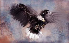 Картинка птица, орел, хищник, перья, bird, feathers, predator, bald eagle