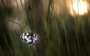 Картинка трава, макро, бабочка, луг, боке, обои от lolita777