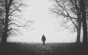 Картинка поле, деревья, ветки, туман, назад, человек