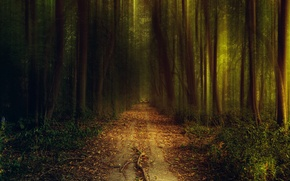 Картинка свет, природа, дорога, деревья, кусты, тропинка, вечер, зелень, трава, осень, лес