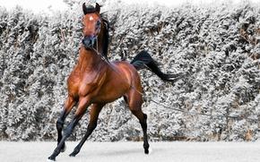 Картинка движение, конь, ветер, бег