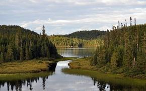 Картинка лес, небо, природа, река, залив
