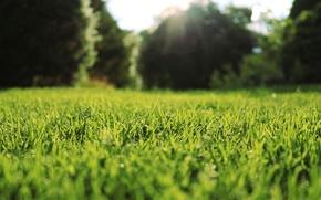 Картинка трава, макро, природа, лужайка