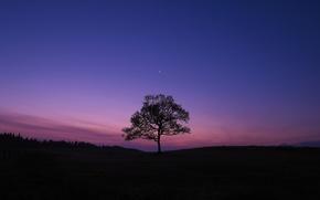 Картинка небо, дерево, вечер, Луна, X-Pro1, Fujifilm