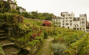 Картинка Франция, Париж, кусты, виноградники, сады, Montmartre Vineyards