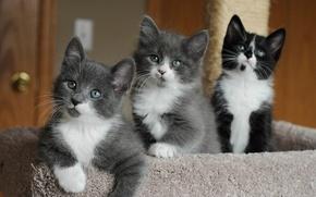 Обои глазки, котята, милые, мордашки