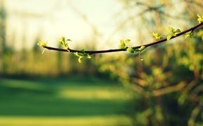 Картинка макро, деревья, зеленый, фон, widescreen, обои, листва, размытие, ветка, листик, wallpaper, листочек, широкоформатные, background, полноэкранные, …