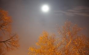 Картинка осень, небо, ночь, луна, moon, лунный свет, moonrise, sky, Night, autumn