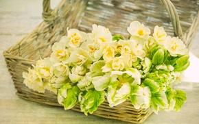 Картинка текстура, тюльпаны, корзинка, нарциссы