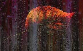 Картинка осень, капли, листок, окно