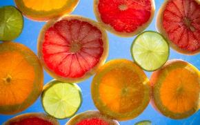 Картинка лимон, апельсин, кольцо, долька, цитрус, грейпфрут