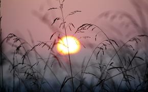Картинка трава, солнце, закат, природа, ветер, растения