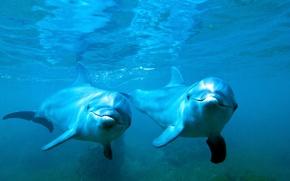 Картинка море, вода, пара, дельфины