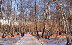 Обои зима, дорога, лес, снег, берёзы