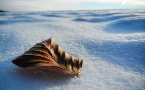 Картинка Макро, Лист, Зима, Снег, Winter, Snow, Macro, Leaves