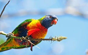 Обои перья, краски, ветка, птица, клюв, попугай