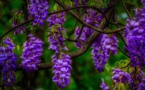 Картинка макро, цветы, ветка, соцветие