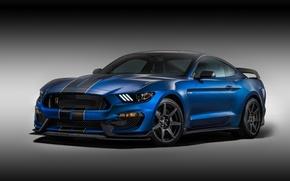 Картинка фон, Mustang, Ford, Shelby, Форд, Мустанг, передок, Muscle car, Мускул кар, GT350R