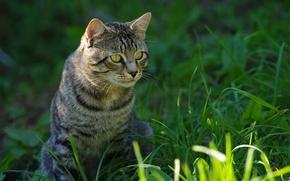 Обои трава, глаза, котэ