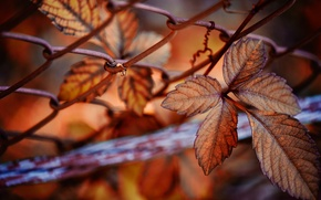 Картинка осень, листья, природа, сетка