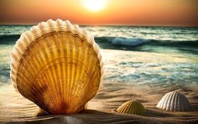 Картинка море, небо, вода, солнце, закат, природа, фон, widescreen, обои, волна, горизонт, wallpaper, ракушки, широкоформатные, background, …