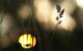Картинка макро, бабочка, силуэт, травинки, боке, обои от lolita777