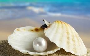 Обои море, ракушка, раковина, марко, жемчужина, жемчуг, песок