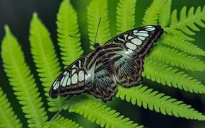 Картинка Макро, Бабочка, Листья, Macro, Butterfly, Leaves