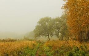 Картинка осень, лес, трава, деревья, природа, туман, фото, тропинка