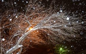 Картинка зима, снег, ночь, дерево