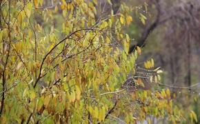 Картинка осень, листья, капли, дождь