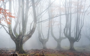 Картинка деревья, природа, туман