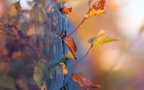 Картинка боке, макро, листва, забор, сетка, ветки, осень