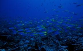 Картинка Океан, вода, рыбы