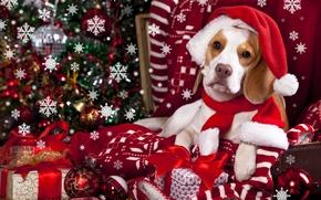Картинка шарики, снежинки, игрушки, собака, шарф, подарки, плед, колпак