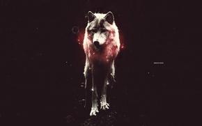 Картинка свет, красный, волк, стоит