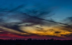 Картинка небо, облака, деревья, закат, вечер, Лес