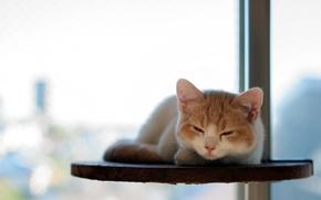 Картинка кошка, отдых, torode