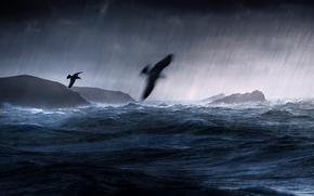 Картинка море, птицы, шторм